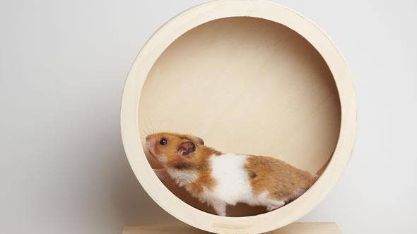 Hamster. Photo: Johannes Menge / Adobe Stock