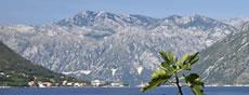 ESI Montenegro reports