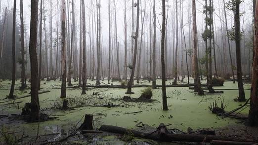 A European swamp